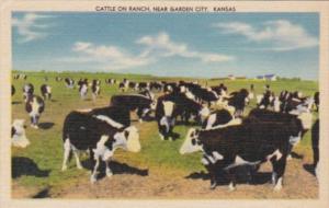 Kansas Garden City Cattle On A Ranch