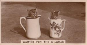 Cat In Jugs For Milkman German Old Real Photo Cats Cigarette Card