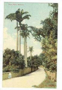 Royal Palms, Bermuda, 00-10s