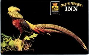 WILLOWS, CA California   GOLDEN  PHEASANT  INN   c1970s  Roadside   Postcard