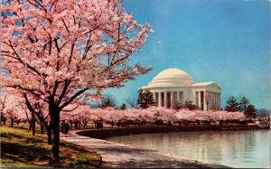Vtg Cherry Blossoms of the Tidal Basin Jefferson Memorial Washington DC Postcard