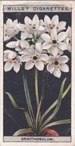 Wills Vintage Cigarette Card Flower Culture In Pots No 38 Ornithogalum  1925