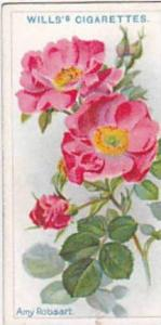 Wills Vintage Cigarette Card Roses A Series 1912 No 15 Amy Robsart