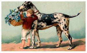 Dog ,  Great Dane , little boy basket of flowers