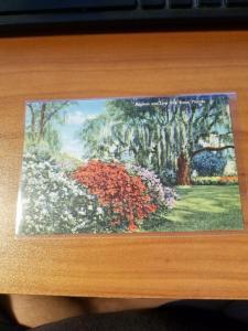 Antique/Vintage Florida Postcard, Azaleas and Live Oak Trees, Florida