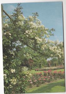 Postcard Surrey Wisley The Royal Horticultural Society's GardenThe Rose Garden