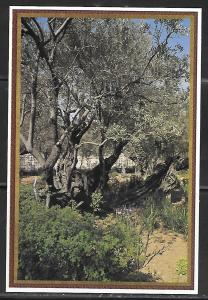 Jerusalem, Garden of Gethsemane, unused