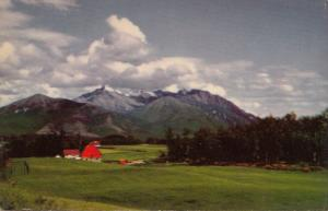 Matanuska Farm, Palmer near Anchorage, Alaska, unused Postcard
