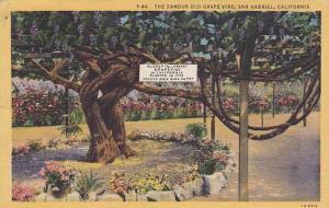 The Famous Old Grape Vine, San Gabriel, California, 1930-1940s