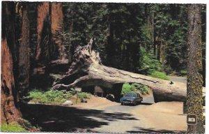 US California - Sequoia National Park, Tunnel Tree.  Unused.