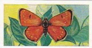 Swettenhams Tea Vintage Trade Card Butterflies & Moths 1958 No 17 Dark Under ...