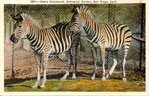 California San Diego Zoological Garden Zebra Compound