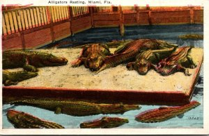 Florida Miami Alligators Resting