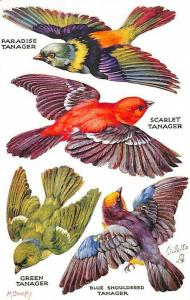 M. Bowley Raphael Tuck #3775 Birds On The Wing Series II Cut-Outs Postcard 3
