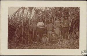 british guiana, Labourers Bamboo or Sugar Cane (1910s) RPPC