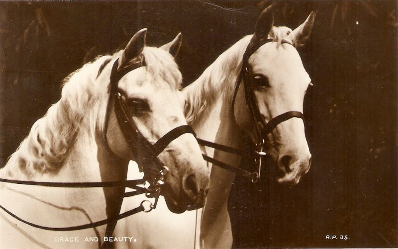 Two horses. Grace and beautyt  Nice old vintage English Postcard