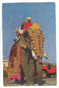 Indian Elephant in head dress and blanket, PU