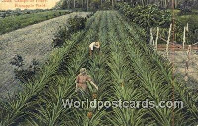 Campo de Pinas, Pineapple Field Republic of Cuba Unused