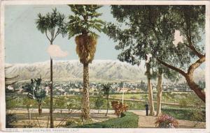 California Pasadena Snow And Palms 1909