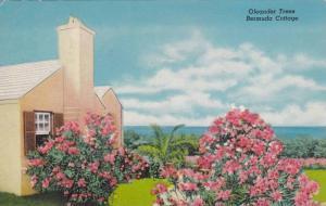 Oleander Trees, Bermuda Cottage, Bermuda,PU-1958