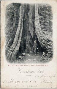 Vancouver BC Big Hollow Tree Stanley Park Two Men Thompson's c1904 Postcard G89