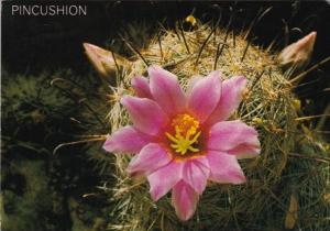 Cactus Blossoms Of The Pincushion