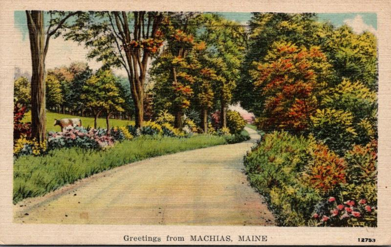 Maine Greetings From Machias 1950