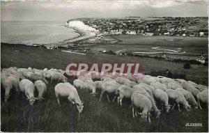 Modern Postcard Criel sur Mer (Seine Mrs) Panorama taken downstream cliffs Sheep