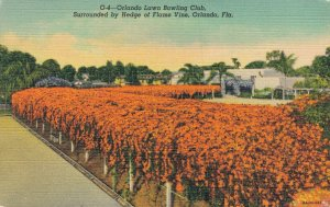 USA Florida Orlando Lawn Bowling Club surrounded by Hedge of Flame Vine 04.33