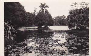 RP, Horta Florestal, São Paulo, Brazil, 1920-1940s