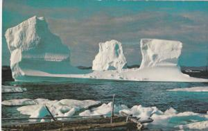 NOTRE DAME BAY, Newfoundland, Canada, 1940-1960's; Iceberg Off Twillingate