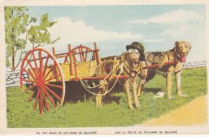 On the road to Ste. Anne de Beaupre, Quebec, Canada, 00-10s; Dog wearing hat and