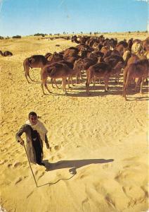 Br43907 le sahara troupeau de chameaux camel animaux animals