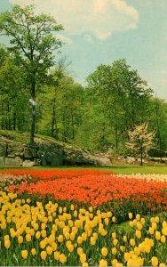 New York Tuxedo Sterling Forest Gardens Spring Tulips