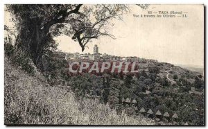 Old Postcard Taza Morocco View through the olive trees