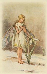Snowdrop Fairy Of Antique Fairies Book Stunning Postcard
