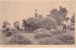 MORRIS , Maine , 1909 ; Farmers baling hay
