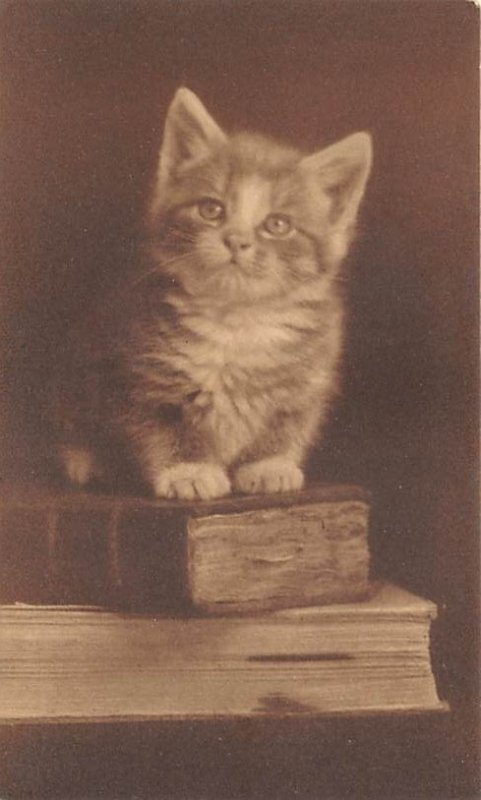 Cat Post Card Kitten Sitting on a Stack of Books Unused