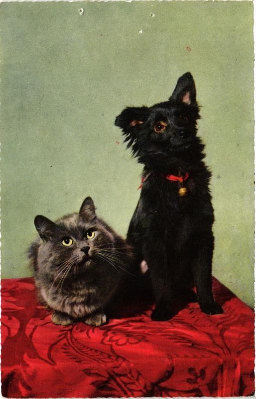 CPM Cat & little dog. CHIEN (717254)