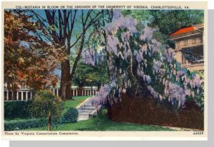 Charlottesville, Virginia/VA Postcard,Wistaria at University
