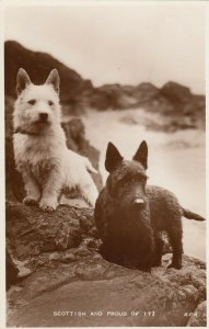 RP: Dogs , Scotland , 1910-20s ; Scottish and Proud of It!