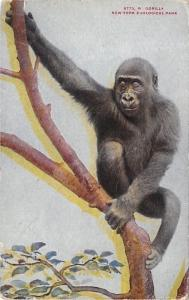 New York City~Zoological Park~Gorilla in a Tree~1910 NYZP Postcard