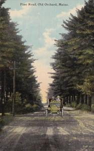 Maine Old Orchard Pine Road 1911 Curteich