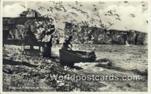 Perce, Quebec Canada, du Canada Birds & Fishermen  Printed Photo Birds & Fish...