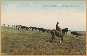 Macleod, Alberta - Cowboy and Horses