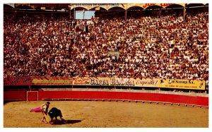 Mexico Tijuana  Bull Fight