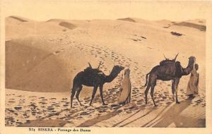 Algeria Biskra Passage des Dunes, Chameaux Paysage, Desert Camels Landscape
