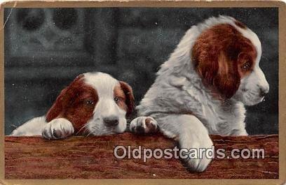 Collie Dog Unused