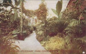Iowa Davenport The Palms Fejeuary Park Conservatory
