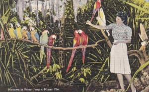 Macaws In Parrot Jungle Miami Florida